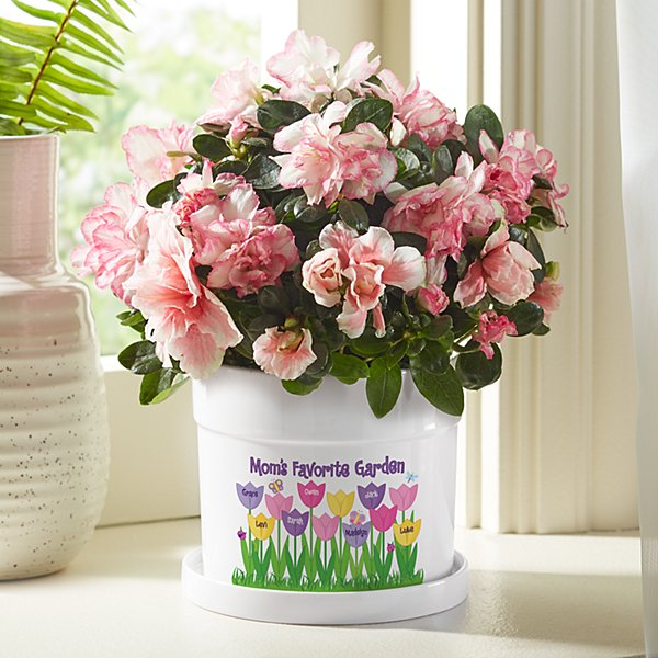 Tulip Garden Flower Pot